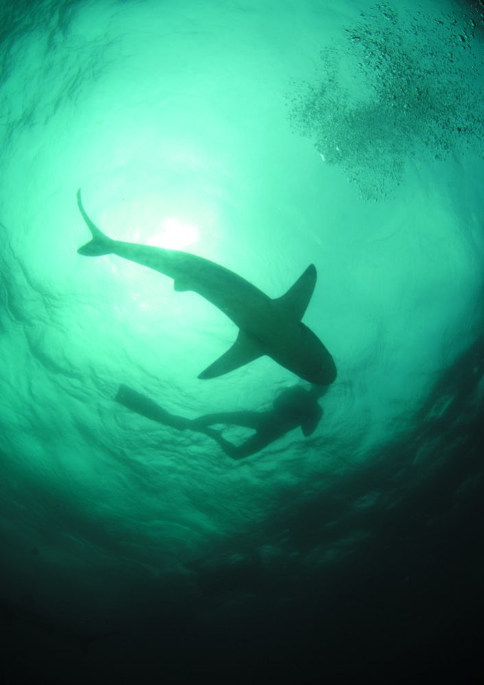 Of Sharks and Man - Shark and Man (c) LOOKSfilm