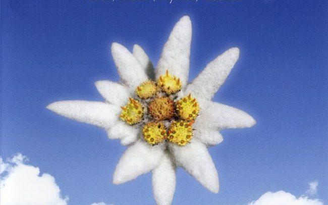 Edelweiss - DVD - (c) LOOKSfilm