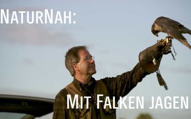 Mit Falken Jagen - Jochen Lehmann mit Falke Titel (c) LOOKSfilm